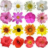 Conjunto de coloridas floraciones estacionales — Foto de Stock