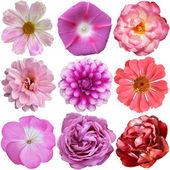 Beyaz arka plan üzerinde izole çeşitli çiçekler seçimi — Stok fotoğraf