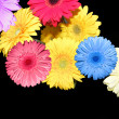 Flowers on black as background — Stock Photo #2307884