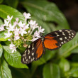 Monarch Butterfly — Stockfoto #14831915