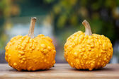 Yellow pumpkins on wooden board — Stok fotoğraf