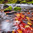 River Kamenice in autumn, Bohemian Switzerland — Stock Photo