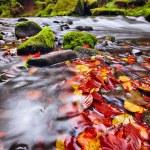 River Kamenice in autumn, Bohemian Switzerland — Stock Photo #33213685