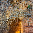 Roots & ruins — Stock Photo #17216565