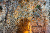 Roots & ruins — Stock Photo