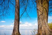 Large trees, blue lake and sky — Stock Photo