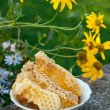 Natural honey in the comb — 图库照片