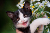 Funny kitten with a bouquet of daisies — Stock Photo