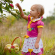 Little girl 2.5 years to pick apples — Stock Photo #13200059