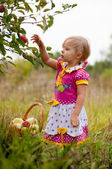 Little girl 2.5 years to pick apples — Stock Photo