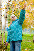 A boy in a birch forest in autumn — Stock Photo