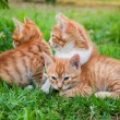 Red kitten in the grass — Stock Photo
