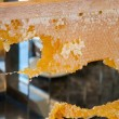 Frame with honeycombs full of honey — Stock Photo