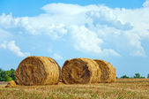 Mown field with bales of straw — Stock Photo