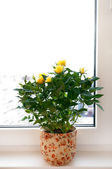 Yellow roses on the windowsill — Stock Photo