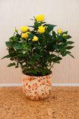 お部屋の花 - 黄色いバラ — ストック写真