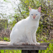 Royalty-Free Stock Photo: Portrait of a white cat outdoors