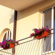 Potted flowers on balcony — Stock Photo