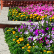 Three ornamental flower beds — Stock Photo #37562447