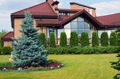 Blue spruce near the cottage — Stock Photo