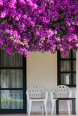 Terrace overgrown with flowers — Stock fotografie
