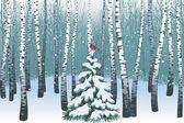 Winter birch wood — Stock Vector