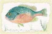Sunfish — 图库矢量图片