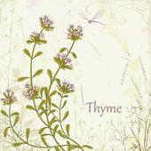 Thyme — Stock Vector