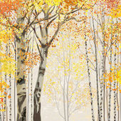 Birch grove in autumn time — Stock Vector