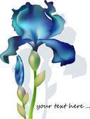 Artistic iris flower — Stock Vector
