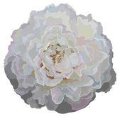 Briar flower isolated — Stock Vector