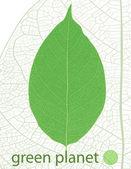 Fresh green leaf card — Stock Vector
