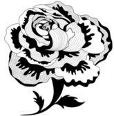 Peony flower — Stock Vector