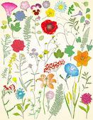 Grande insieme di piante e fiori (oltre 40 elementi) — Vettoriale Stock