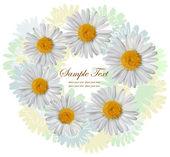 Sfondo con i fiori di camomilla — Vettoriale Stock