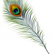 Peacock feather. — Vettoriale Stock  #17257949