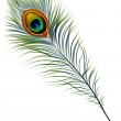 pluma de pavo real — Vector de stock  #17257949