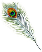 Peacock feather. — Stock Vector