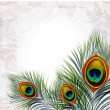 Beautiful vector peacock feathers - Imagens vectoriais em stock