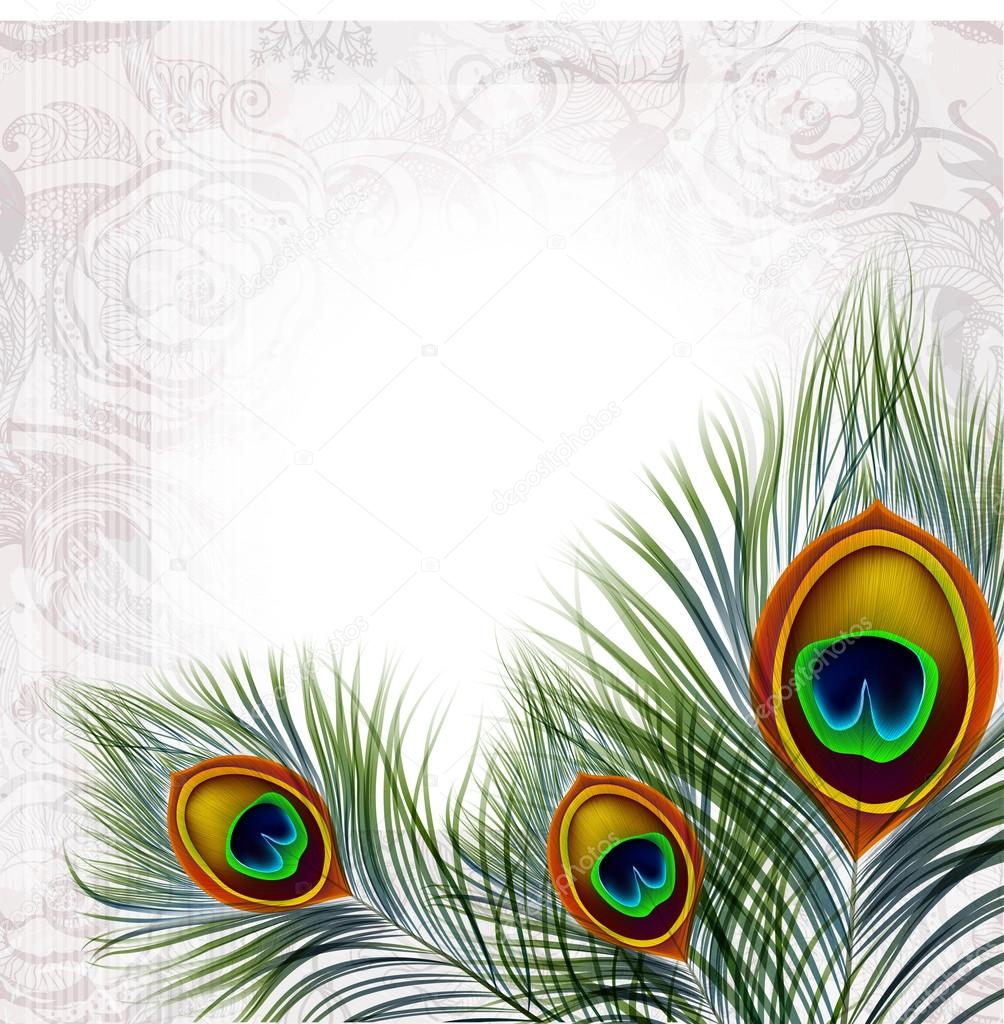 Beautiful vector peacock feathers stock vector juliet for Where can i buy peacock feathers craft store