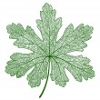 Vector leaf isolated - Stock Vector