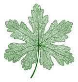Vector leaf isolated — Stock Vector