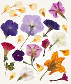 Isolated vector Flowers for your design. — 图库矢量图片