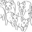 Pigs — Stock Photo