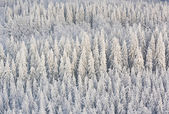 Winter forest in finland — Stockfoto