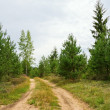 Stock Photo: Path in pine tree forest