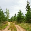 Path in pine tree forest — Stock Photo