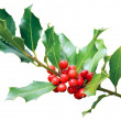 Holly tree branch isolated on white — Stock Photo #34923383