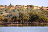 Outback Ocean Mangroves, near Redbanks at the top of Spencer Gul — Stock Photo