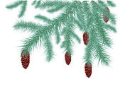 Spruce branches — Vector de stock